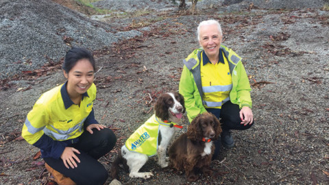 Detection dogs help to sniff out water pipeline leaks
