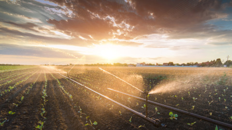 Boost For Goulburn-Murray Irrigation