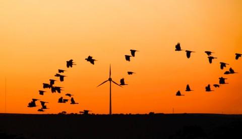 Renewable energy set to power over half of Australia