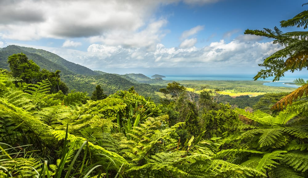Daintree community to power on
