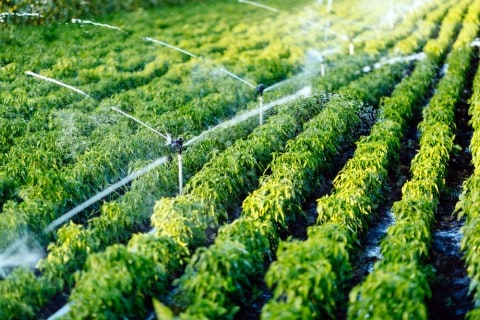 Tasmanian farmers to benefit from new irrigation projects