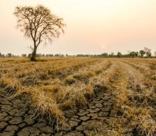 WaterNSW updates Lake Cargelligo on drought outlook