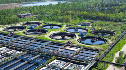 Microparasite could solve wastewater treatment problems